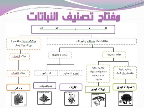 مفتاح تصنيف النباتات